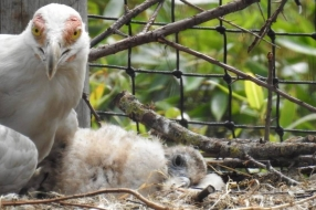 Nieuws: Bijzondere geboorte in Overloon: palmgiertje kruipt uit het