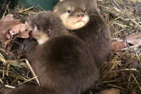Nieuws: Drukte op de kraamafdeling van ZooParc Overloon: 20 baby's g