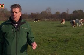 Nieuws: Eerste Brabantse boeren gaan natuurinclusief boeren: natuur