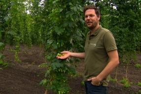 Nieuws: Giel is dol op speciaalbier en verbouwt nu hop voor Brabants