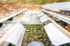 Nieuws: Hennepkwekerijen op de gekste plekken: van kelders in het bo
