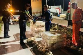 Nieuws: Kippen gedood, omdat ze niet goed vastzaten op vrachtwagen