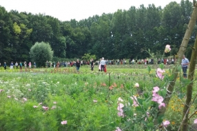 Nieuws: Kwekerij bij Velps kasteel wordt nieuw leven ingeblazen