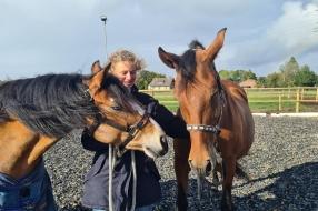 Nieuws: Sanne is dolblij met nieuwe pony's na drama waarbij er drie
