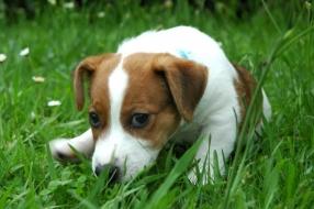 Tiny (71) woedend over diefstal puppy's en doden moederhond: 'Dit zijn geen mensen'